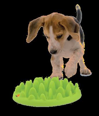Green_Slow_Dog_Feeder-e1434372115152